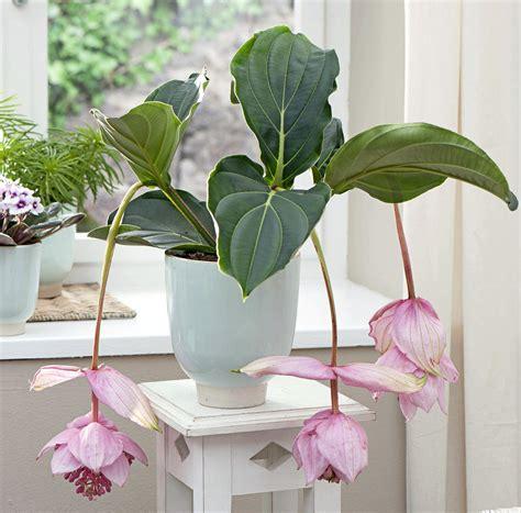 plante verte pour chambre quelle plante verte pour quelle pi 232 ce de la maison