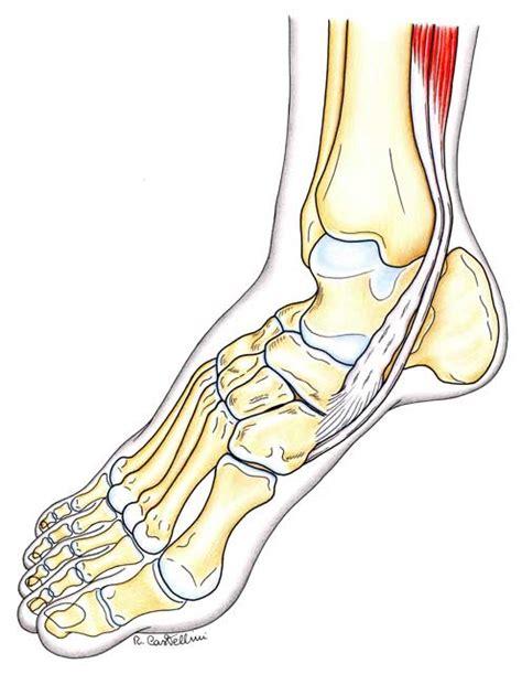 dolore al tallone interno dolore nel mio tallone e nella parte inferiore piede