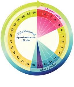 Calendario Menstrual De La Mujer Calculadora De D 237 As F 233 Rtiles Cu 225 Ndo Quedar Embarazada