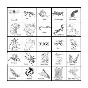 Insect Templates by Classical Chaos Insect Bingo