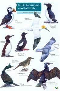 guide to summer coastal birds rebecca farley brown mike