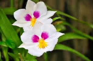 most popular flowers blok888 top 10 most beautiful flowers in the world 1