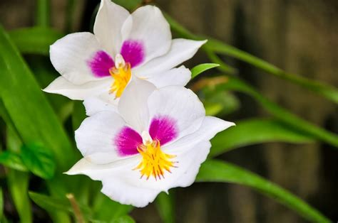 10 Most Flowers For by Blok888 Top 10 Most Beautiful Flowers In The World 1