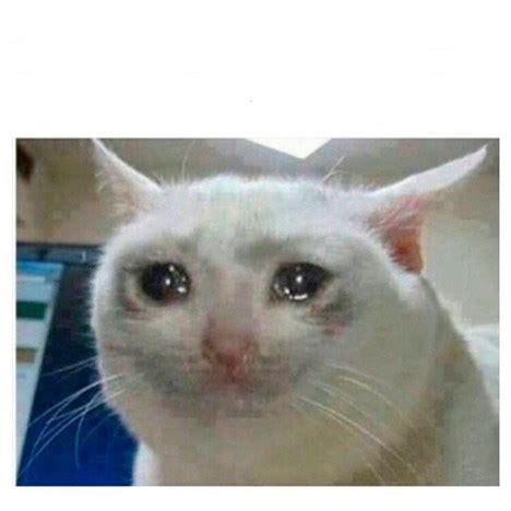 gato lloroso meme generator