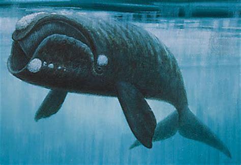Hem Whale terry s place how do whales quot do it quot