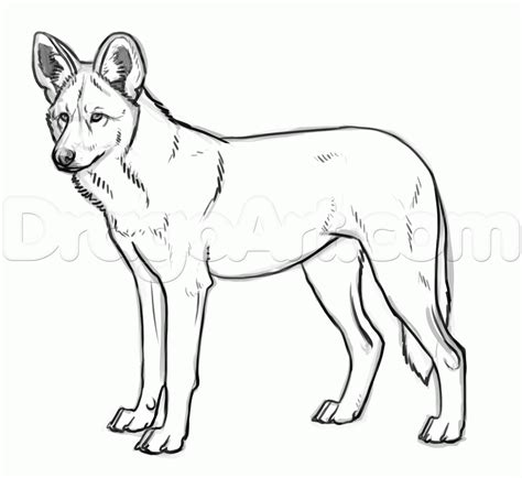 wild dog coloring page how to draw african wild dogs step by step safari