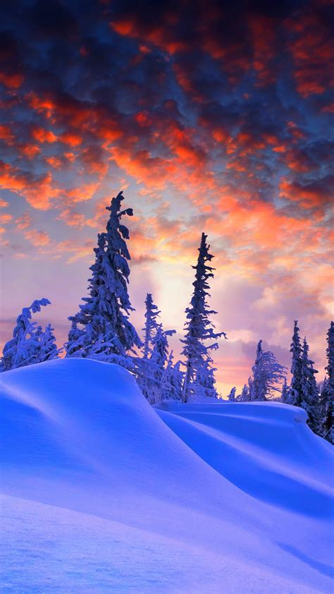 wallpaper winter pine trees snow covered sunset
