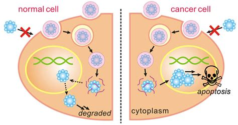 diagrams of breast cancer breast cancer cells diagram www pixshark images