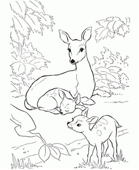 Rainforest Colouring Page Animal Deer Forest Coloring Pages Coloringsuite Com by Rainforest Colouring Page