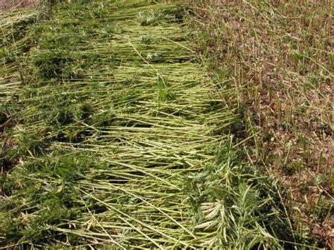 canapé made com garantitaly 187 il rilancio della produzione della fibra di