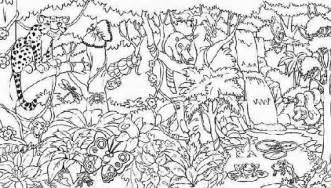 rainforest colors tropical rainforest coloring sheets images