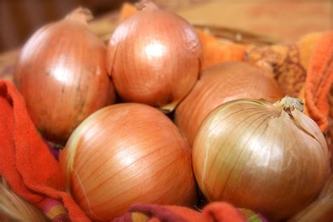 dogs eat onions side effects of onions search engine at search