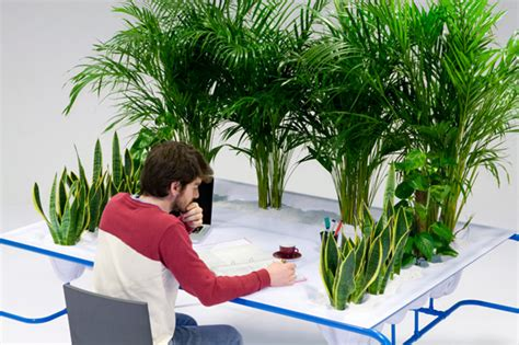 plant for desk cleanest greenest desk uses three indoor plants to grow