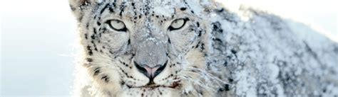 macbook pro 1 1 snow leopard her er bakgrunnsbildene fra snow leopard mac1 no