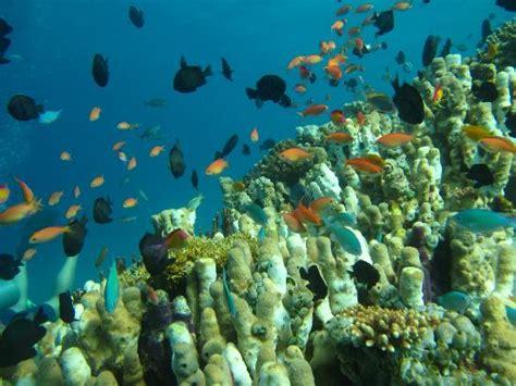 manta dive manta dive gili trawangan 2018 all you need to