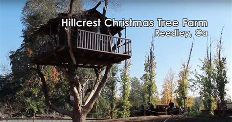 take a ride with the family hillcrest christmas tree farm