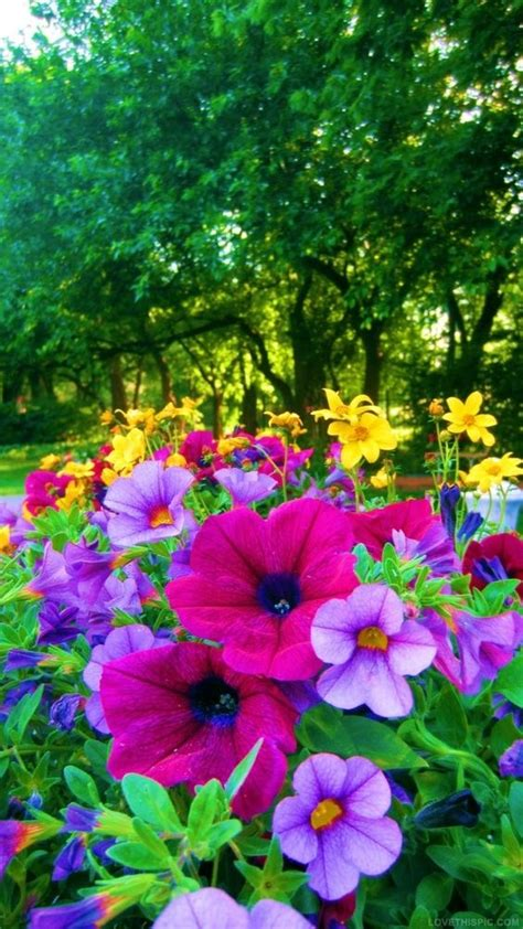 Colorful Flower Gardens Bright Colored Flowers For The Garden Colorful Flowers Garden Bright Yard Flowerbed