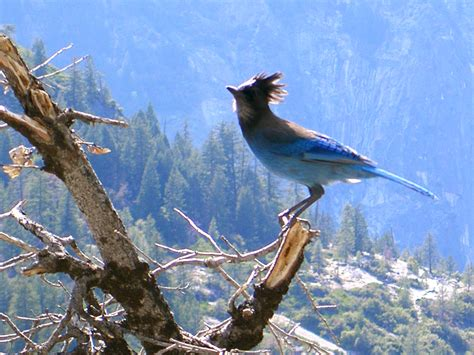 wallpaper blue with birds funny image collection beautiful blue bird wallpaper