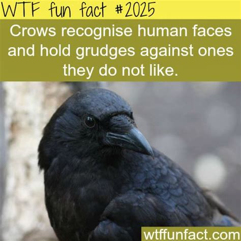 25 best ideas about bird facts on pinterest humming