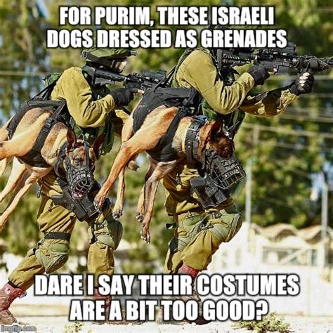 Purim Meme - holstered attack dogs imgflip