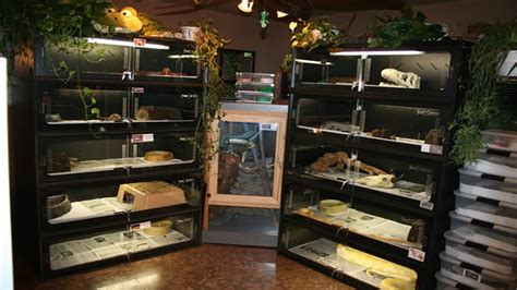 reptile rooms reptile room august 2016