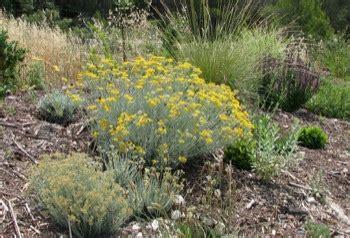 Plante Pour Jardin Sec by Jardin Sec P 233 Pini 232 Res Quissac