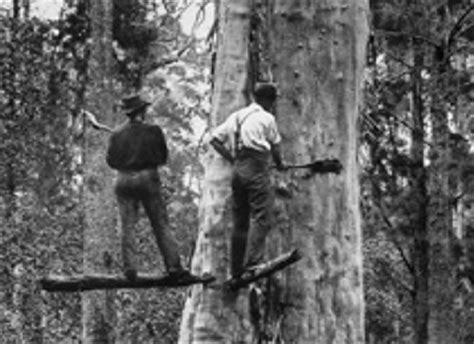 scfc history of forest industry history forestry corporation of nsw