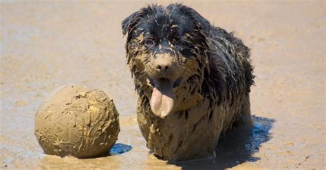 how often to wash puppy how often should i wash my rover