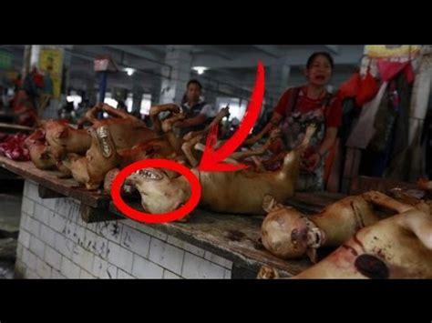 yulin festival 2017 festival yulin en china 2017 hd si eres sensible no veas este porque es