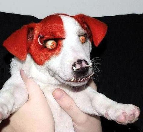 scary puppy image gallery scary puppy