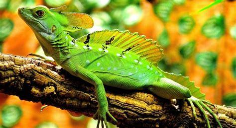 imagenes de animales vertebrados reptiles 10 caracter 237 sticas de los reptiles