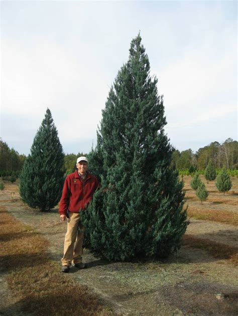 wadsworth christmas tree farm 3071 dexter road wetumpka