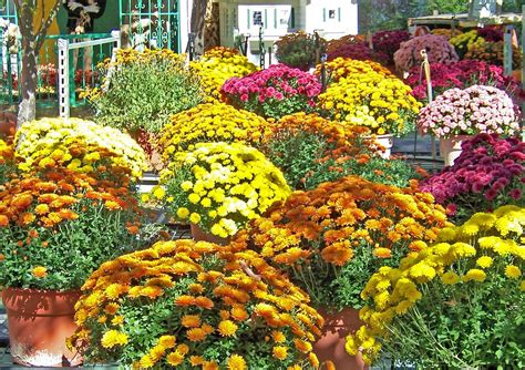 free photo flowers autumn fall pot free image on