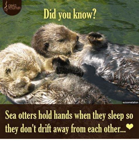 Sea Otter Meme - funny otters memes of 2016 on sizzle baby it s cold outside