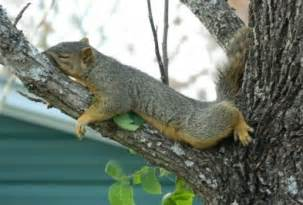squirrel facts 101 frequently asked questions about