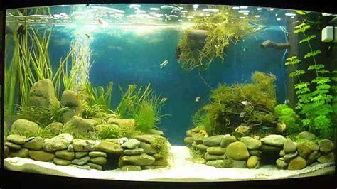 Aquascape Fish Planted Juwel Vision 180 Aquarium Aquascape Complete