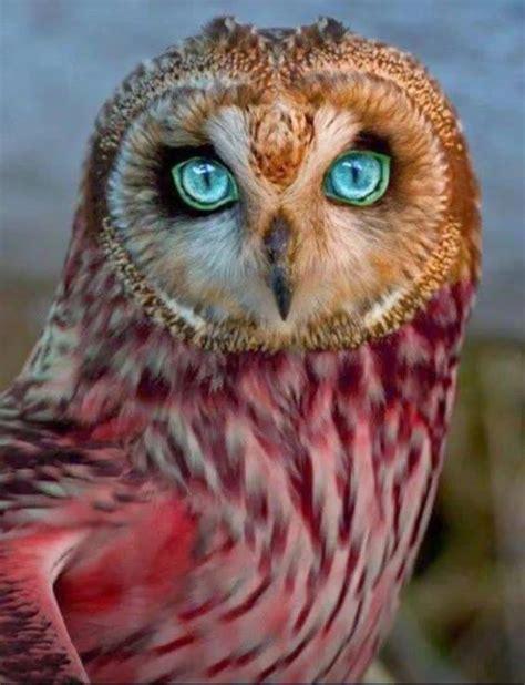 bilder speisesã len v 237 deo lindas fotos de p 225 ssaros de varias especies o