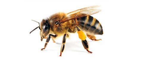 terminator pest control bees 0800 373023