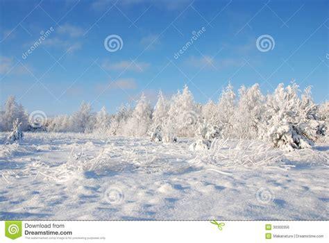 frosty forest royalty free stock frosty winter meadow royalty free stock image image