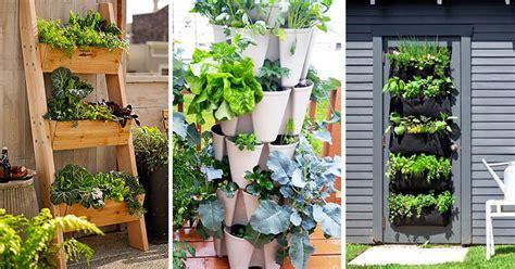 vertical vegetable garden ideas  beginners