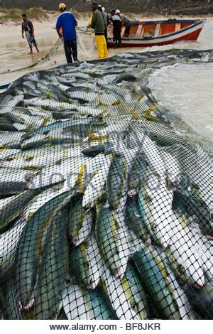 fishing boat jobs in cape town commercial fishing boat w full net of herring uses trans