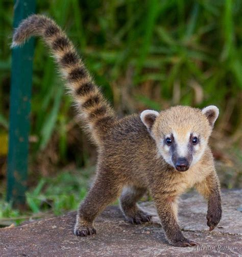 17 best images about on pinterest the zoo mexico and andes mountains