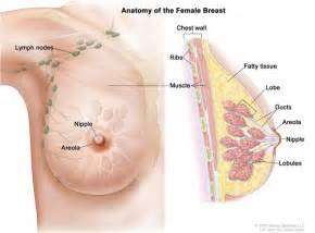 How Can U Determine The Gender Of Your Baby by Alternative Cancer Treatment Options Holistic