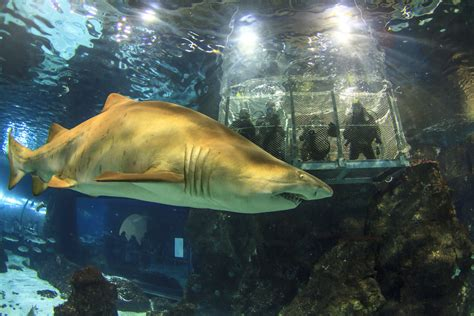 entradas l 180 aquarium de barcelona taquilla - Entradas Aquarium Barcelona