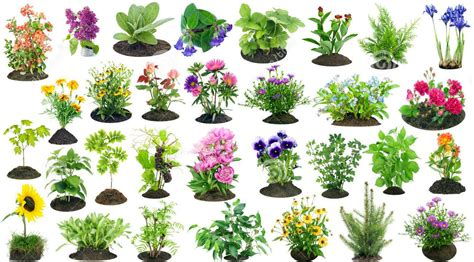 imagenes de flores y animales c 243 mo cuidar a los animales y plantas en el corregimiento