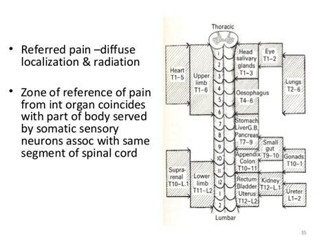 section 35 2 the nervous system 2 sympathetic nervous system
