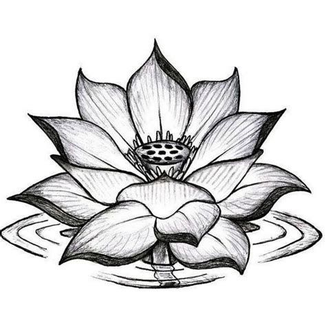 tatuaggio fiori di loto uomo disegno a matita di un fiore di loto mandala uomo