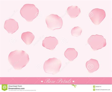 Petal Pink pink petals stock vector image of isolated real