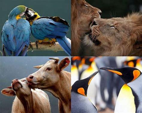 fotos animales juntos mundo animal juntos p 225 gina 1