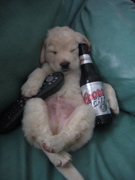 silly puppy pictures guys and dogs puppy pictures